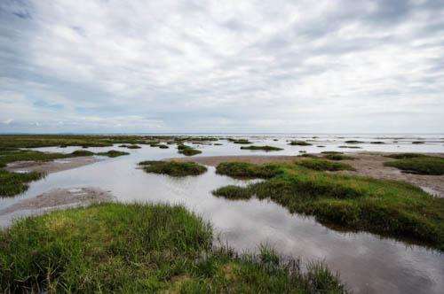 marshland and sea