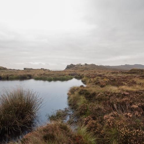 Bog and moor, Staffordshire moorlands