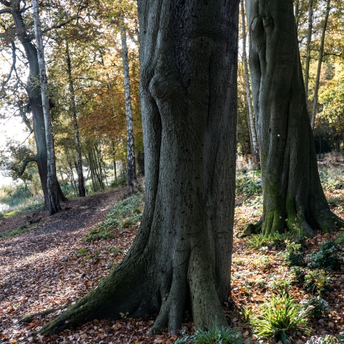 In the old woodland