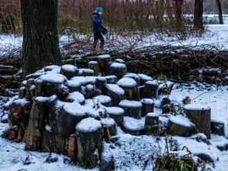 Snow on logs