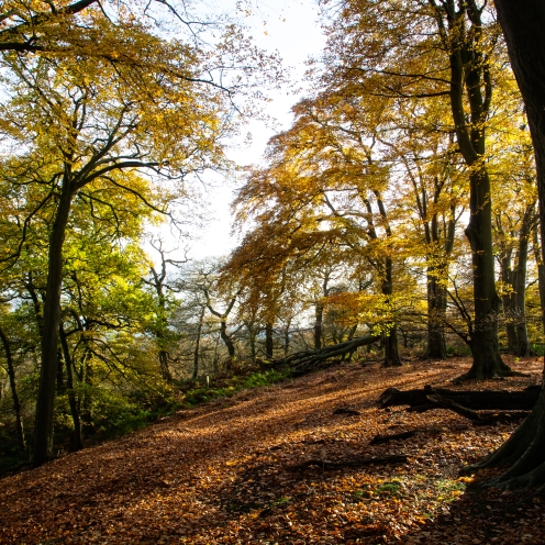 Autumn colour in Kingswood Staffordshire