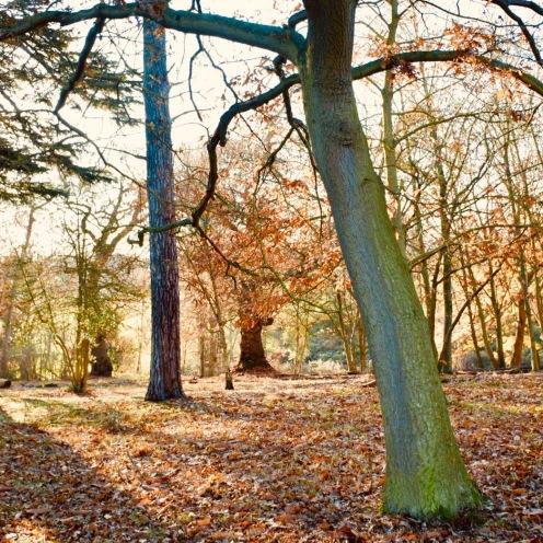 Woodland late autumn