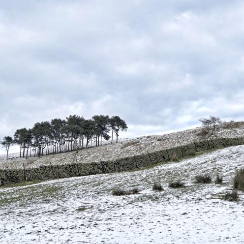 Treeline in the snow