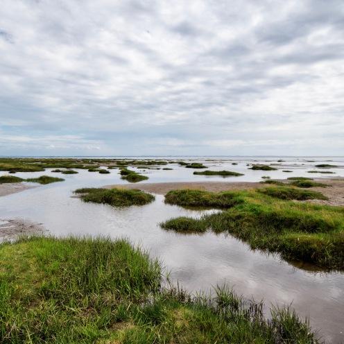 Marsh and estuary