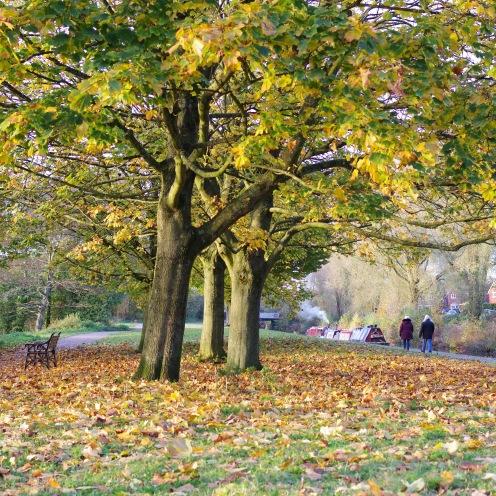 Autumn canal walk
